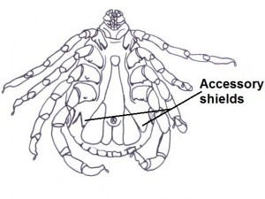 Accessory shields/ plates